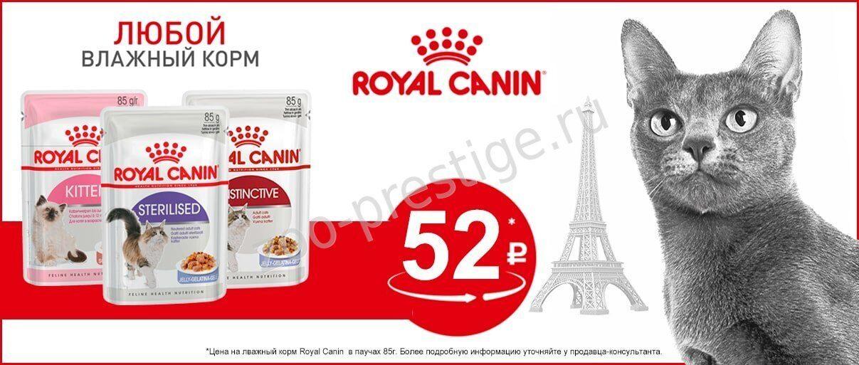 Корм Royal Canin для кастрированных котов, состав, фото и