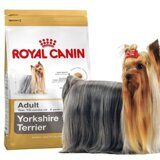 full-royal-canin-yorkshire-terrier3